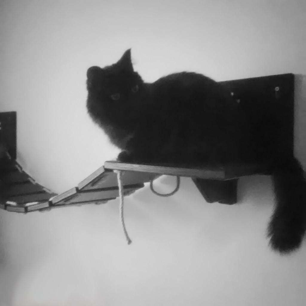 Cat Bridge Lupin