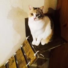 Cat Bridge Shilou
