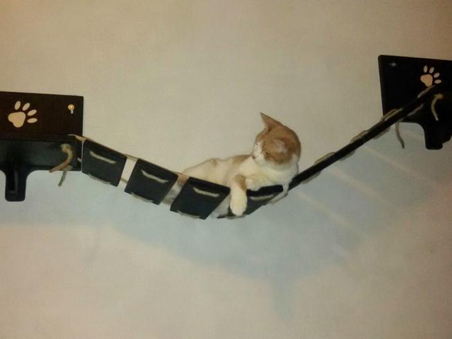 Cat bridge wood