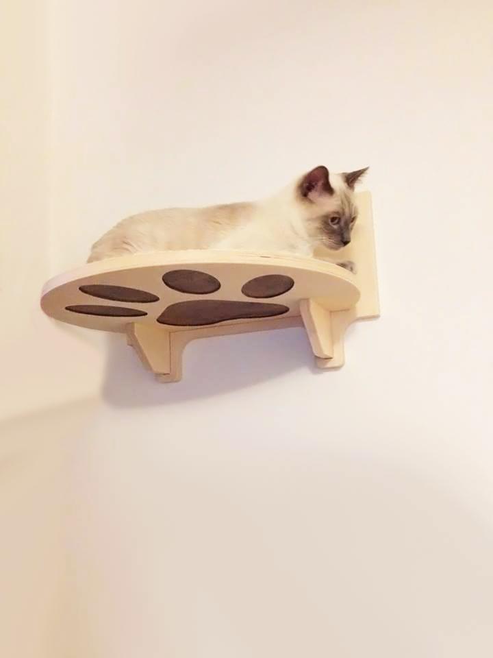 Cat gym