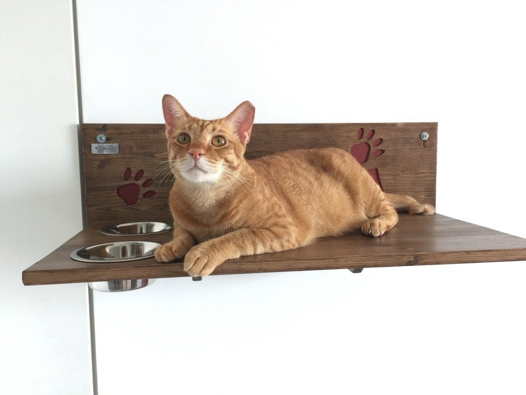 Cat shelf with bowls writing