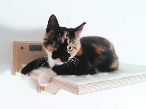 Cat shelf with fabric