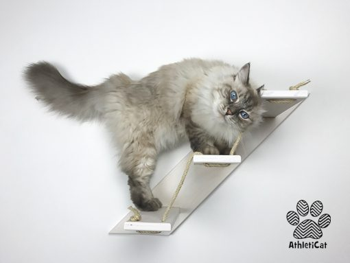 Cat stair