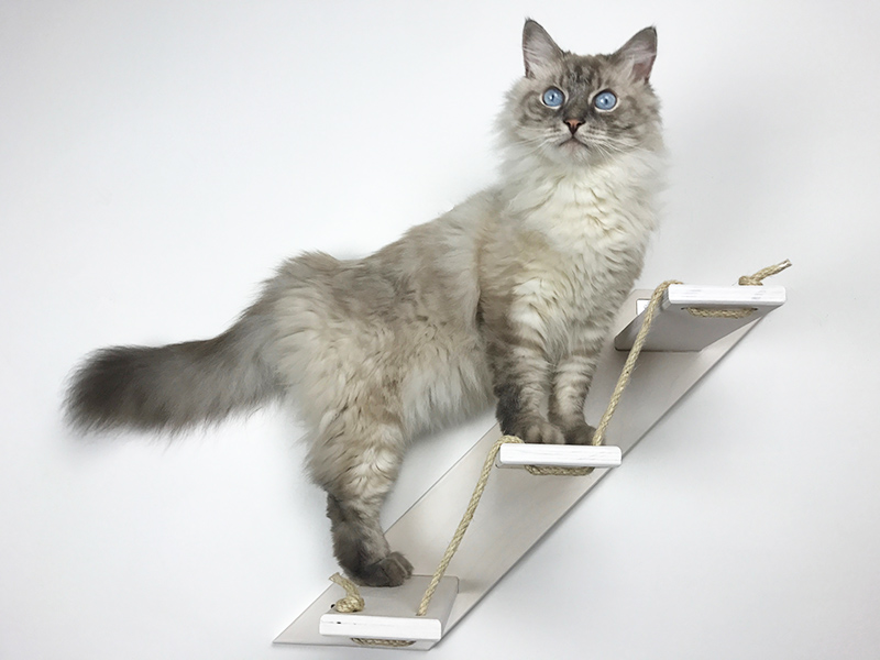 Cat Stair with 3 steps