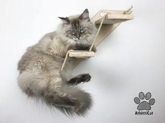 Cat stair