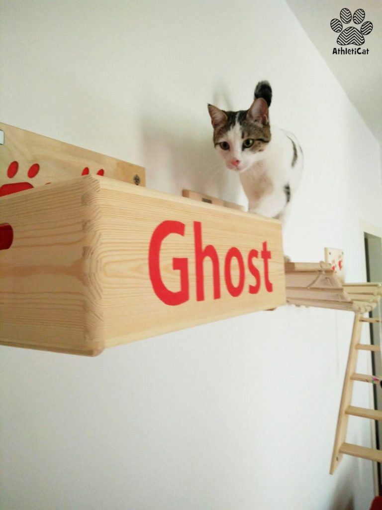 Wall mounted cat gym