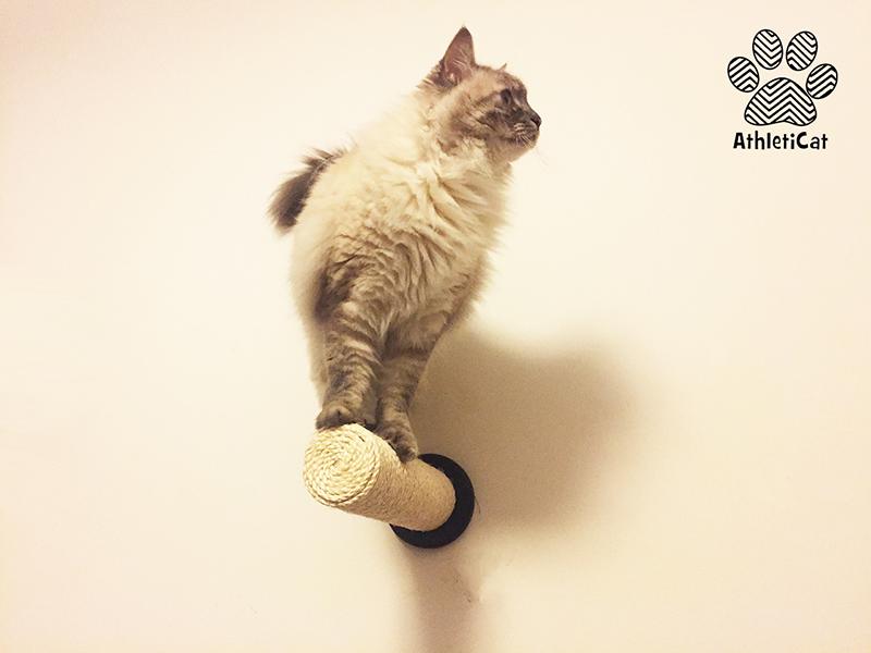 Wall mounted cat scratcher athleticat - Wall mounted cat scratcher ...