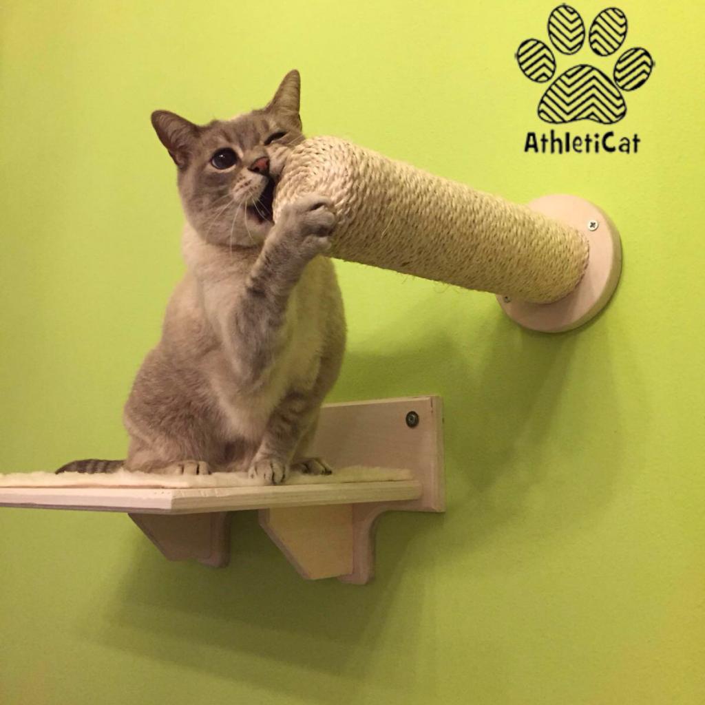 Wooden cat gym