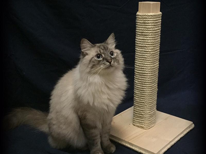 Wooden cat scratch post