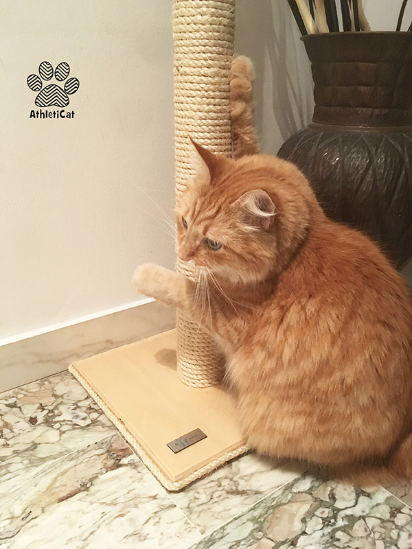 Wooden cat scratcher