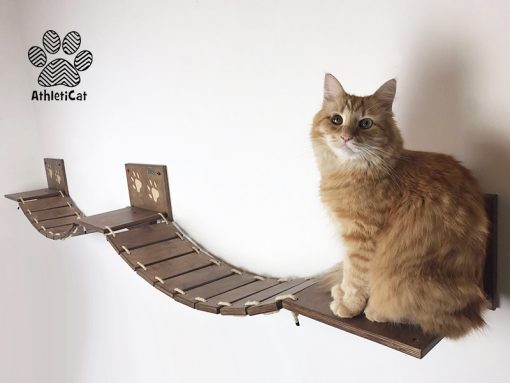 Cat bridge long version