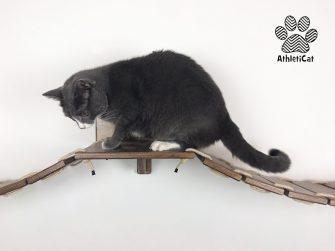 Cat bridge long version