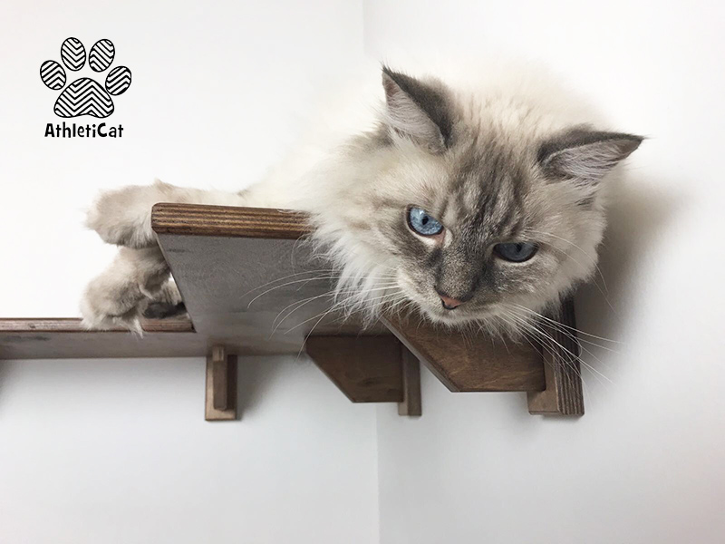 Cat corner shelf