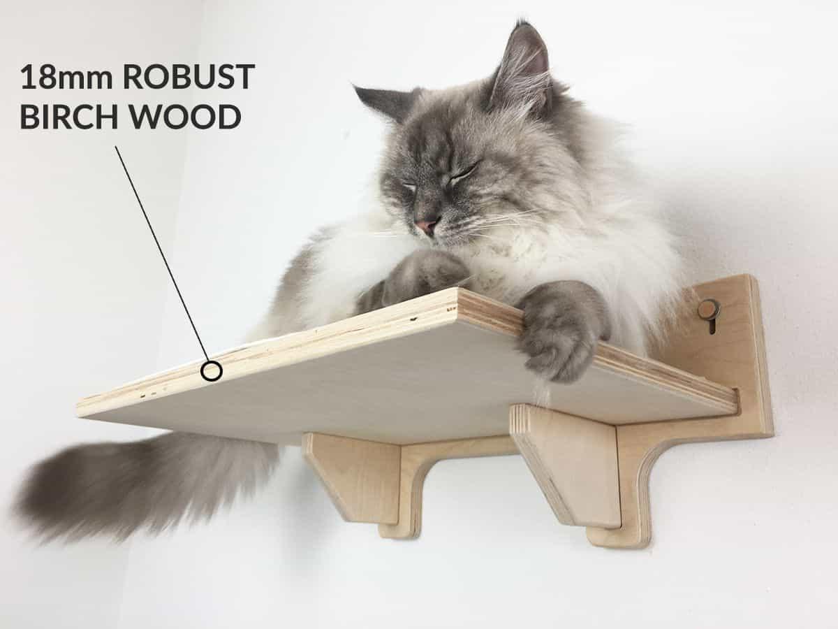 Robust birch wood