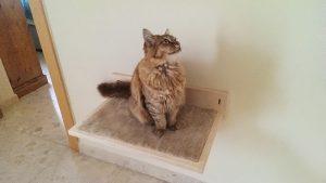 Lily cat shelf