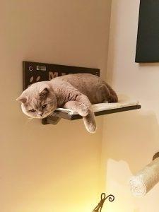 Margot cat shelf