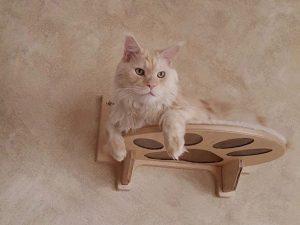 Umarth cat shelf