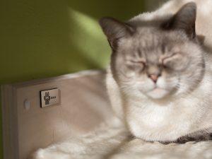cat shelf white