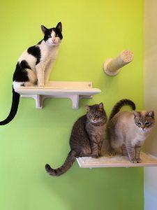 cat wall