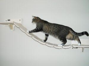 cats bridge
