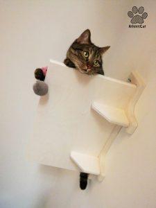 cats shelf