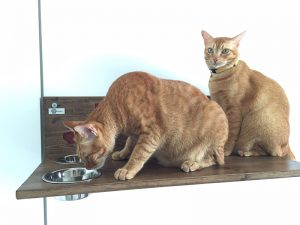 shelf for cats with bowls
