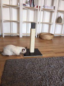wooden scratcher for cats