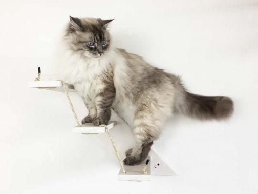 White cat stair